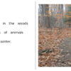 Autumn In The Woods pages 2-3
