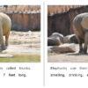 06_07 ElephantsAtZoo
