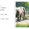 08_09 ElephantsAtZoo