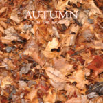 Autumn in the Woods Cover