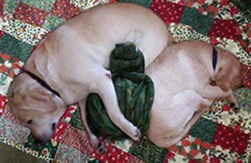 Christmas Sleeping Dogs