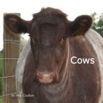 Cover of Cows