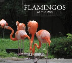 Flamingos At The Zoo Cover