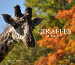 Giraffes at the Zoo Cover