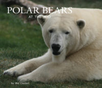 Polar Bears at the Zoo Cover
