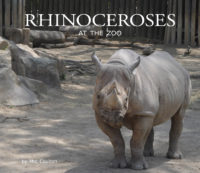 Rhinoceroses At The Zoo