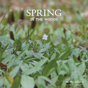 Spring in the Woods Cover