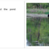 ThePond_06-07
