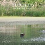 Cover of Turtles Around the Pond