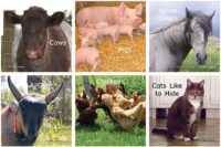 Favorite Farm Animals