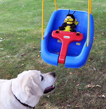 Bee in swing with Danny watching