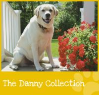 the-danny-collection-graphic