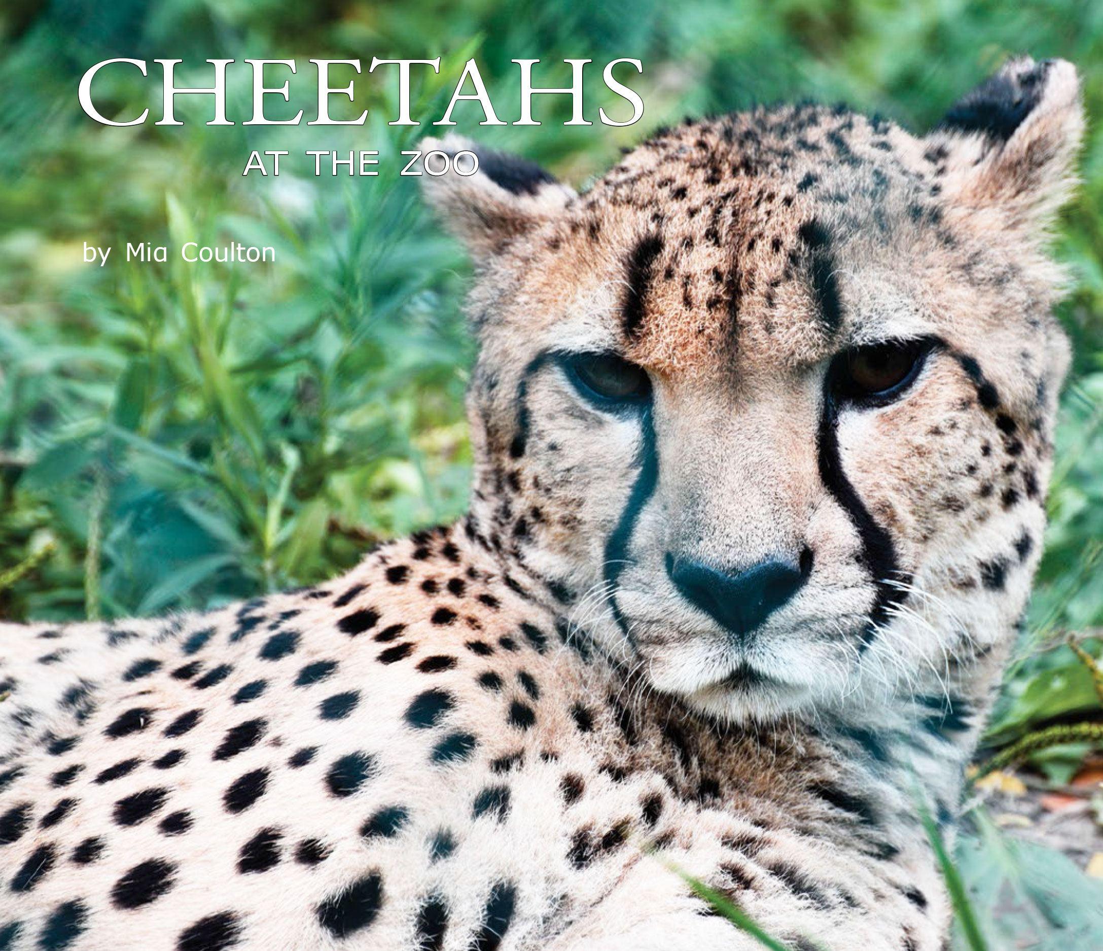 Cheetahs at the Zoo Cover