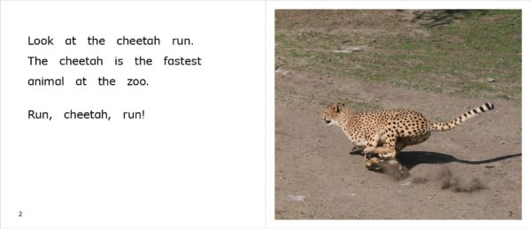 Page spread 2-3 for nonfiction title Cheetahs at the Zoo