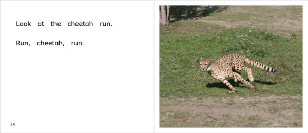 Page spread 14-15 for nonfiction title Cheetahs at the Zoo