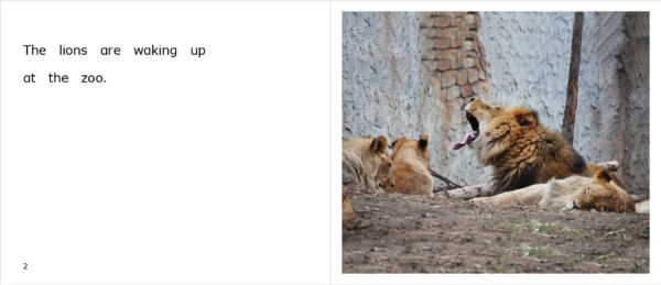 Pages 2-3 of the nonfiction title, Lions at the Zoo, appropriate for upper emergent readers.