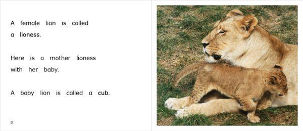 LionAtZoo_08-09