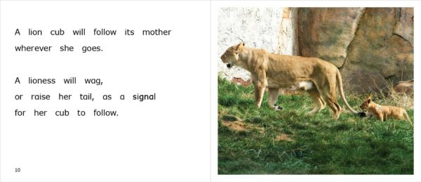 Pages 10-11 of the nonfiction title, Lions at the Zoo, appropriate for upper emergent readers.
