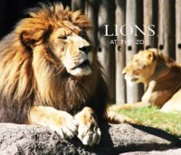 The nonfiction title Lions at the Zoo CVR