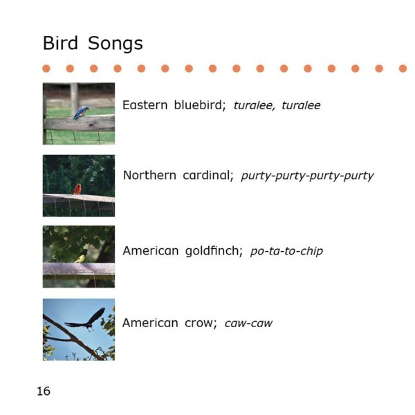 Bird song glossary in Ornithologist Danny, from Science Danny series