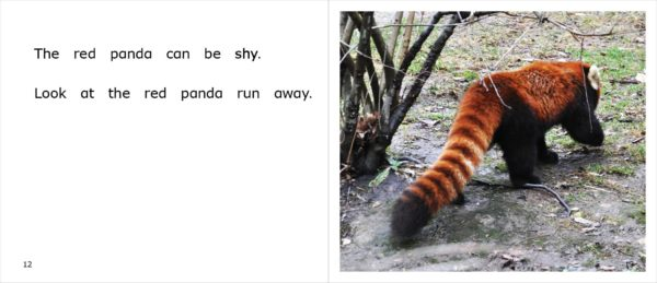 Page spread 12-13 from Red Pandas at the Zoo