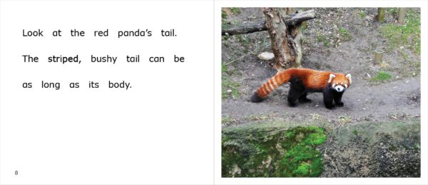 Page spread 8-9 from Red Pandas at the Zoo