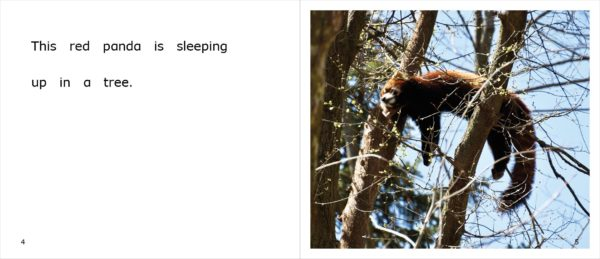 Page spread 4-5 from Red Pandas at the Zoo