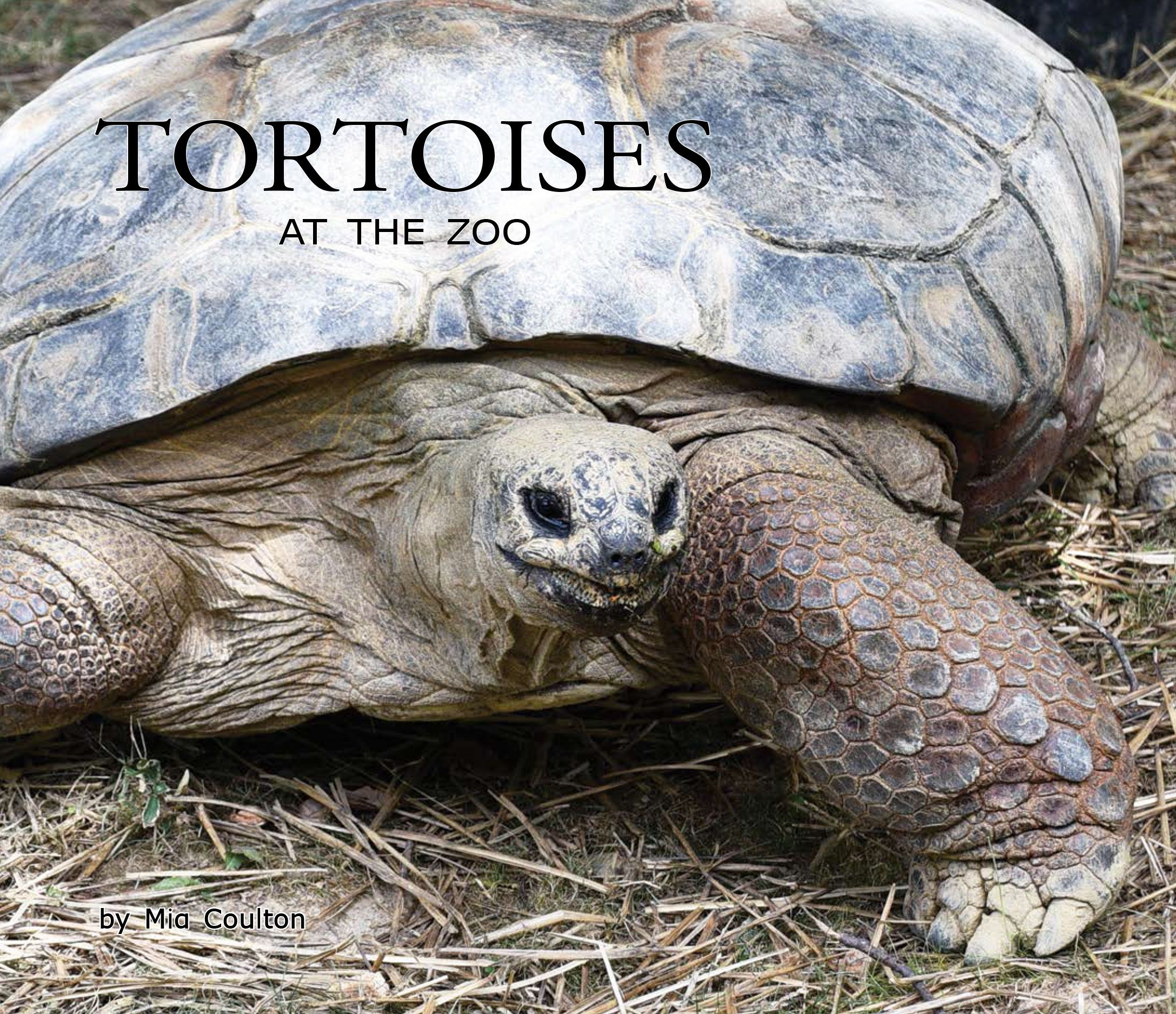 Cover of Tortoises at the Zoo for upper emergent readers