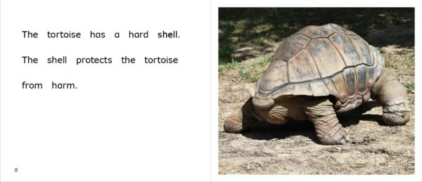 Tortoises at the Zoo pages 8-9