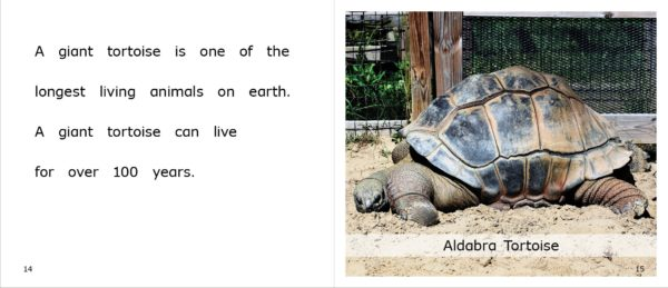 Tortoises at the Zoo pages 14-15