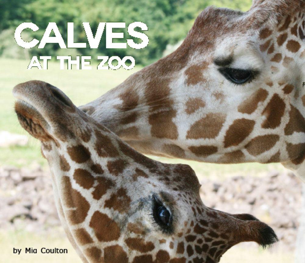 Calves at the Zoo