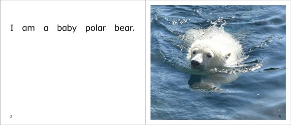 A polar bear cub