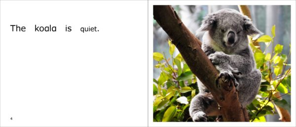 The koala is quiet.