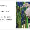 SeahorseAtAquarium pages 08-09