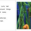 SeahorseAtAquarium pages 12-13