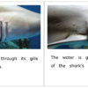 Sharks At The Aquarium pages 10-11