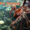 Octopus At The Aquarium Cover
