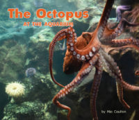 Octopus At The Aquarium Cover
