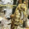 Seahorses At The Aquarium Cover