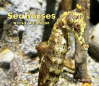 Seahorses At The Aquarium Cover