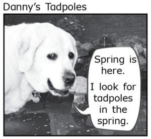 Dannys Tadpole