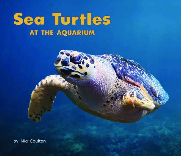 Sea Turtles at the Aquarium_CVR