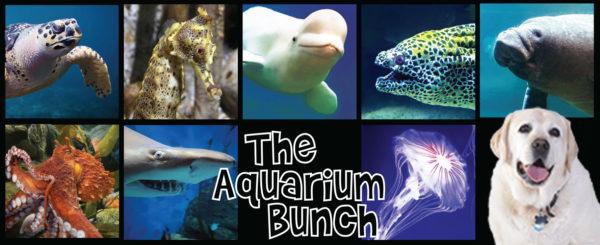 Aquarium Bunch Product