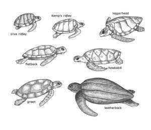 Sea Turtles at the Aquarium illustration